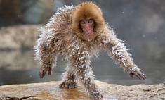 самые смешные фото диких животных финалисты конкурса 2019