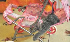 25 самых забавных котов Сургута