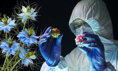 ученые обнаружили новое средство коронавируса цветок