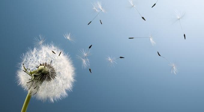 Новая жизнь с понедельника: почему мы не можем измениться