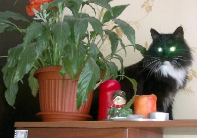 Кот Светланы Пермяковой