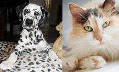 Собаки & кошки: кого в Иркутске любят больше