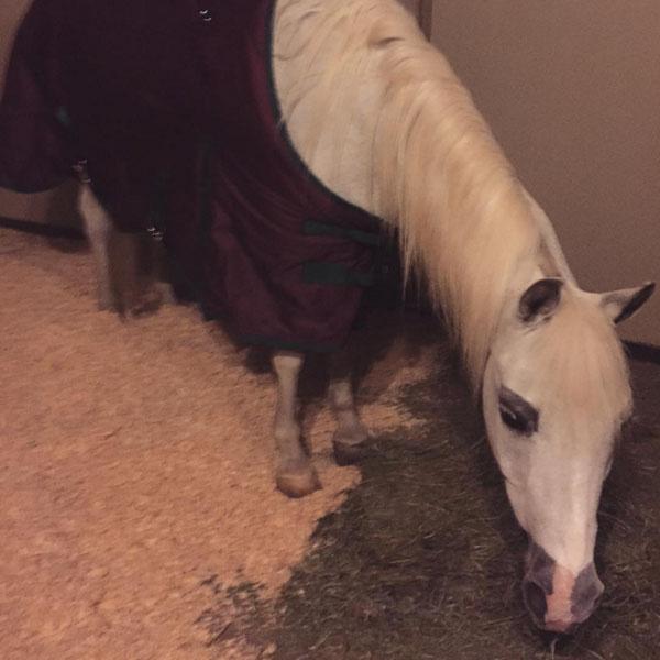 У Леди Гага теперь есть и принц, и белый конь
