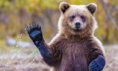 Малыш решил поиграть с медведем в зоопарке, и вот что вышло