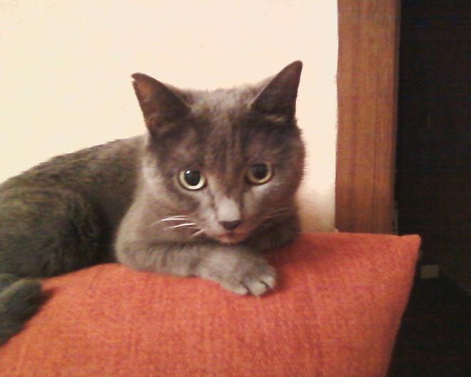 конкурс кошек фото