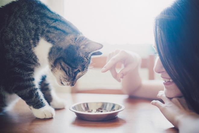 как приучить к корму