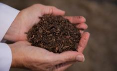 Американская компания придумала, как делать из людей удобрения, и предлагает перерабатывать почивших родственников в компост