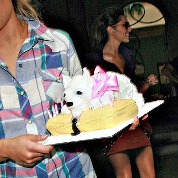 Торт в виде щенка для Шерил Коул