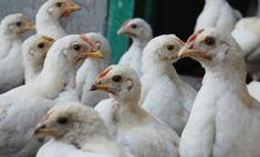 В Германии закрыто более 4,5 тыс. ферм