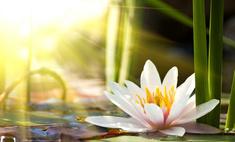 Цветок одиночества: тайна названия