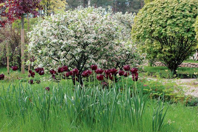 Растений в саду много не бывает - чем больше красок, тем лучше.