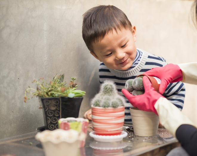 кактусы в домашних условиях