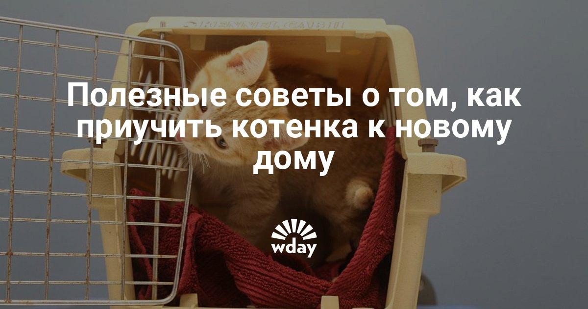 как помочь котенку освоиться в новом доме