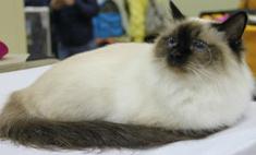 Такие милашки: 30 котиков для весеннего настроения