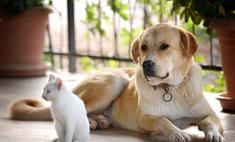 Американские ветеринары вылечат животных марихуаной