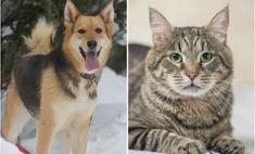 Котопёс недели: собака Ляля и кот Зидан