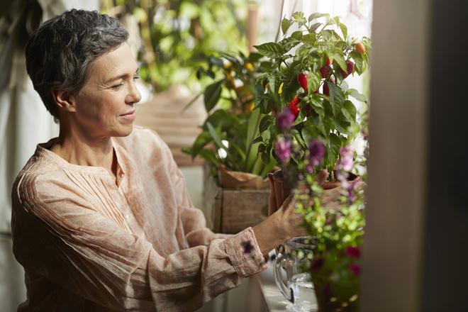 Особенности пересадки цветов в январе