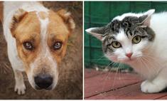 Котопёс на карантине: кошка Мотя и алабай Артур ждут своих людей