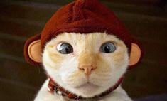 Топ-20 самых мимишных котиков Петербурга. Голосуем!