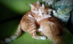 Два разлученных кота встретились, когда их хозяева познакомились