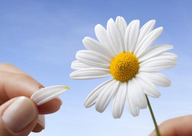 В День семьи волгоградцам подарят «Ромашки для любимых»