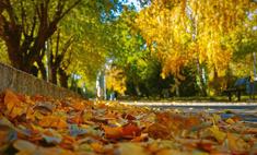 В Волгограде выдался аномально теплый ноябрь