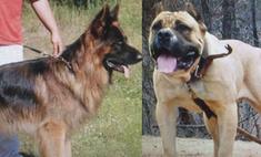 В поисках друга: Анна Седокова выбирает собаку