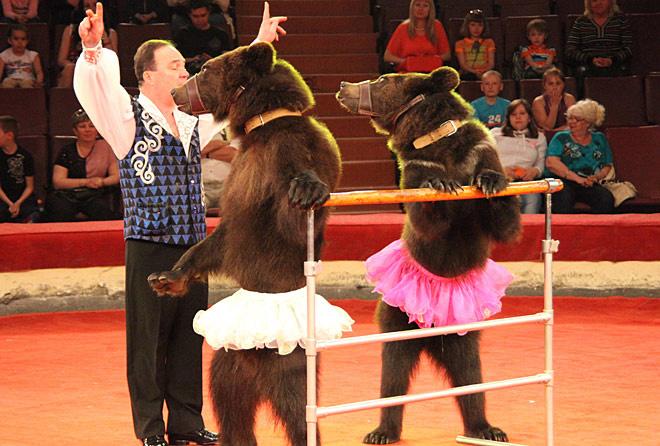 В Воронеж приедут медведи-гиганты и клоуны-баламуты