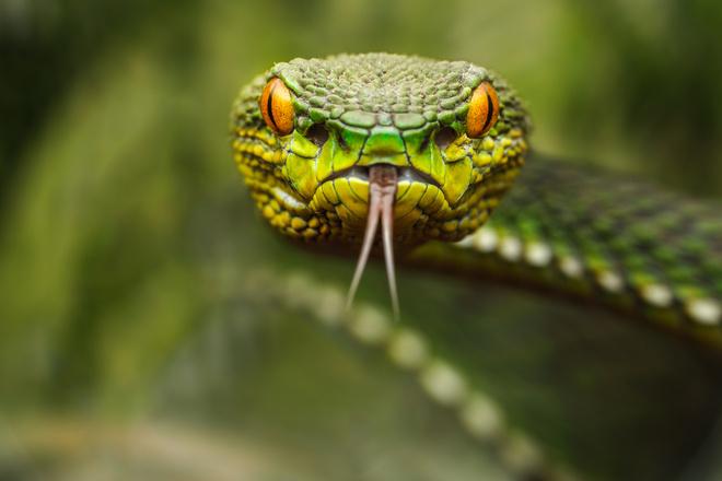 машина с знаком змеи