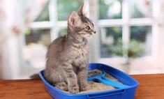 Приучаем котенка к лотку: особенности «образования»