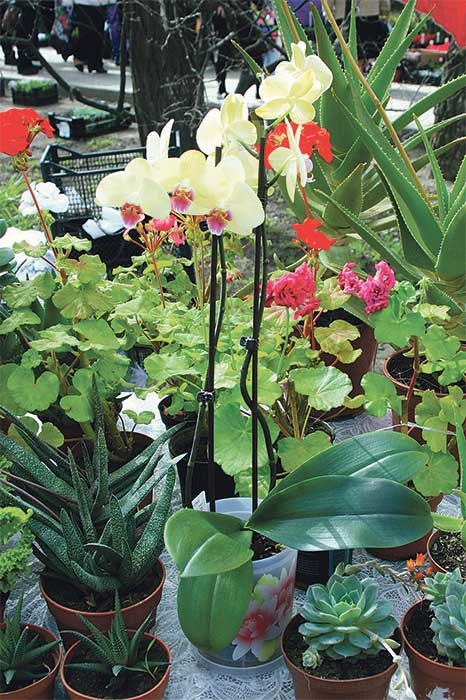 Выставка цветов в Ростове, ярмарка цветов, цветы в ростове на дону, куда пойти в Ростове, афиша Ростова, куда пойти с ребенком