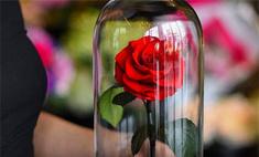 Это чудо! Розы из «Красавицы и Чудовища» реально существуют