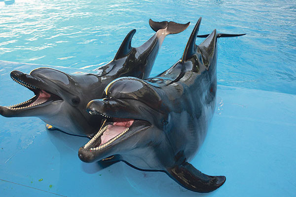 Дельфинарий Сургут