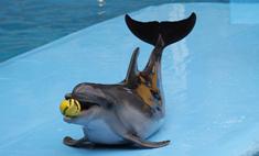 Открытие дельфинария в Новосибирске откладывается