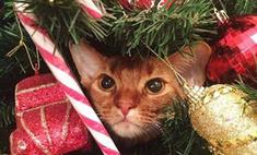 Новогодние котики: 17 праздничных фотографий
