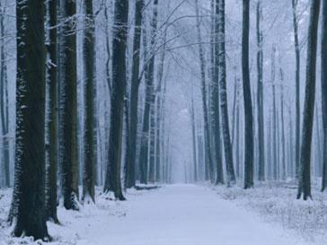 Вырубка Химкинского леса начнется в конце года