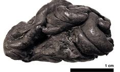 Учёные воссоздали женщину каменного века по куску смолы, который она жевала