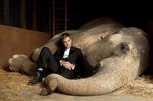 Кадр из фильма «Воды слонам!»