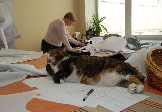 Кошки – непременные участники творческого процесса. Для них в мастерской находятся корзины, впрочем, эти любимцы шоу-рума выбирают и сами себе места, например, на столах для закройки.