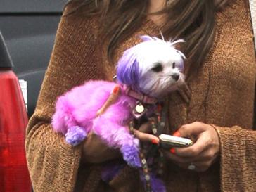 Активисты PETA не одобряют модных экспериментов с животными