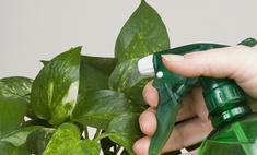 Растения и сухой воздух: способы защиты