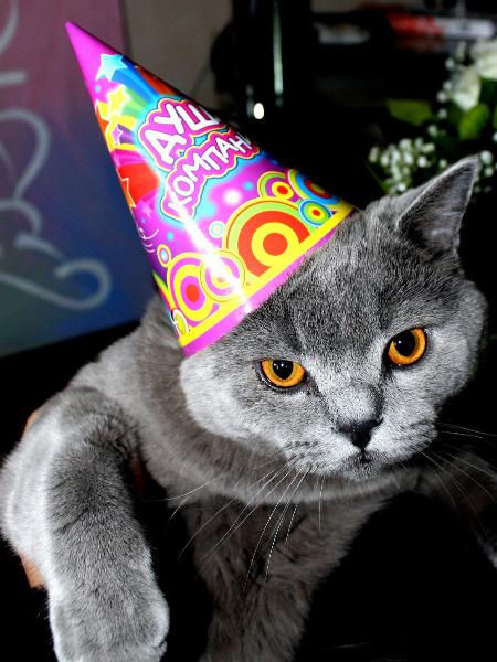 Джордж, коты Тулы