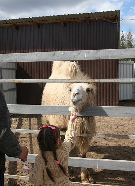 тюменский зоопарк животные фото