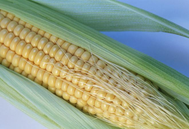Кукуруза при беременности