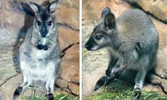 В воронежском океанариуме поселился кенгуру