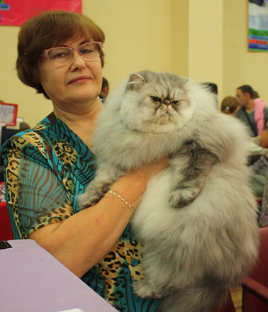 """Персидская кошка, выставка """"Городские кошки"""""""