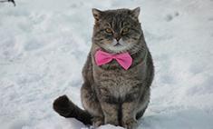 30 самых прикольных котов Ставрополя!