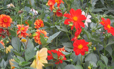 В Томске высадят больше 200 тысяч цветов