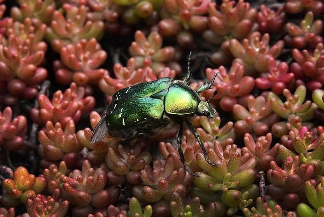 К чему снятся жуки, сонник