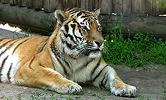 Ростовский зоопарк: а настроение улучшилось!